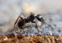 มด การ กำจัดแมลงและสัตว์พาหะ