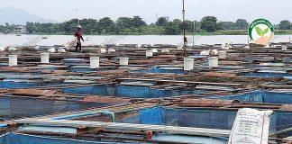 2.กระชังปลาระบบมาตรฐาน